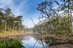 Jungle du Népal (Chitwan). images stock