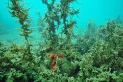 Jungle of dusty seaweeds Royalty Free Stock Images