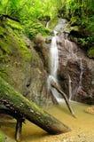 Jungle en Amérique Centrale Photo libre de droits