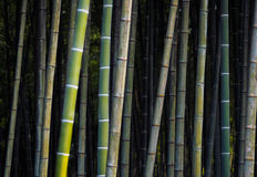 Jungle en bambou Photographie stock libre de droits