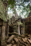 The jungle encroaching on Ta Prohm Temple, Angkor, Cambodia Stock Photos