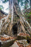 The jungle encroaching on Ta Prohm Temple, Angkor, Cambodia Royalty Free Stock Photography