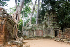 The jungle encroaching on Ta Prohm Temple, Angkor, Cambodia Royalty Free Stock Images