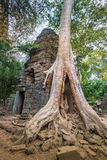 The jungle encroaching on Ta Prohm Temple, Angkor, Cambodia Stock Images