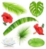 jungle Ensemble de lames et de fleurs Centrales tropicales Graphismes de vecteur illustration libre de droits