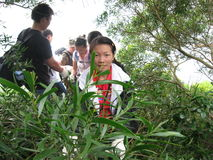 The jungle Expedition in SHENZHEN Stock Photography