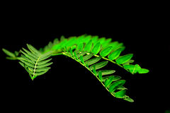 Jungle fern. Closeup shot of jungle fern stock images