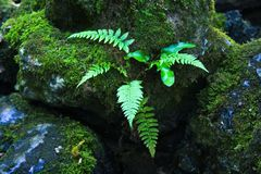 Jungle fern Royalty Free Stock Photo
