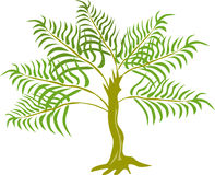 Jungle Fern tree plant. Vector art of trees and flora isolated on white background Stock Image