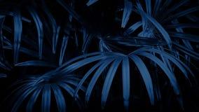 Jungle Ferns In Breeze At Night. Tropical fern plants in the dark stock video