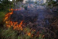 Jungle Fire landscape. Burn nature environment Royalty Free Stock Photos