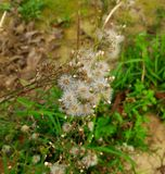 Jungle flower Stock Photo