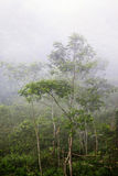 Jungle in a fog Royalty Free Stock Photography