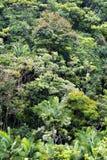 Jungle foliage Stock Photography