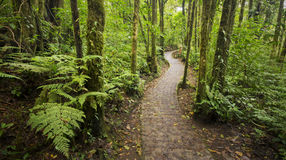 Jungle footpath from within the dense Costa Rican rainforest. Stock Photos
