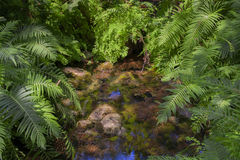 Jungle or Forest Royalty Free Stock Photos