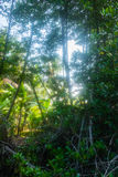Jungle forest Royalty Free Stock Image