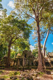 Jungle Forest at Angkor Wat Area Royalty Free Stock Photos