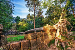 Jungle Forest at Angkor Wat Area Royalty Free Stock Image
