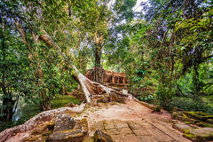 Jungle Forest at Angkor Wat Area Stock Image