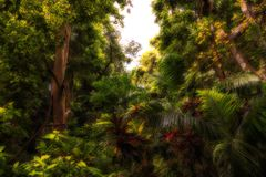 Mysterious, dark jungle forest Stock Photos