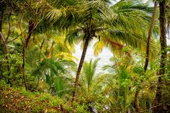 Jungle forest in devils island, french guinea. Rainforest with green palm trees at sea side. Nature environment and ecology. Summe. R vacation in tropic Stock Photo