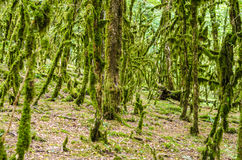 The jungle forest Royalty Free Stock Photo