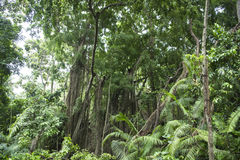 Jungle forest Royalty Free Stock Photo