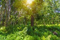 Jungle forest Jozani Chwaka Bay National Park, Zanzibar, Tanzania stock photo