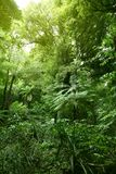 Jungle forest Royalty Free Stock Photos