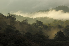 Jungle forest and mountain with mist Stock Image