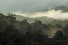 Jungle forest and mountain with mist Stock Photography