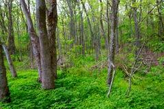 Jungle Forest Park dans le Texas extérieur photos stock