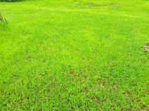 Jungle, forest, plants, Tree, Grass, Green grass, green trees, Park garden, plant, farm royalty free stock images