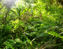 Jungle Forest Plants Royalty Free Stock Images