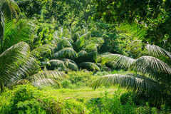 Jungle forest scenic background. Royalty Free Stock Images