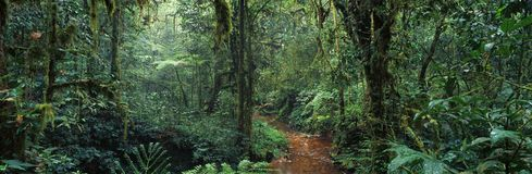 Jungle. Forest tree africa congo panorama landscape rainforest branch grass royalty free stock image
