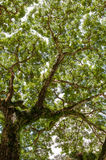 Jungle forest tree. nature green wood sunlight Royalty Free Stock Image