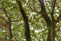 Jungle forest tree. nature green wood sunlight backgrounds Royalty Free Stock Photos