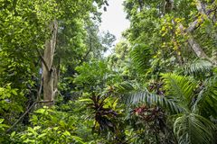 Tropical jungle forest in Barbados Stock Photography