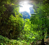Jungle Forest. Tropical background. Exotic plants Royalty Free Stock Photo