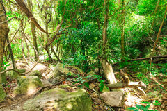 Jungle forest Stock Photography