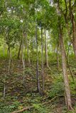 Jungle forest vegetation Royalty Free Stock Images