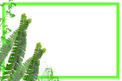 Jungle frame. Jungle fern frame with white background Stock Photography