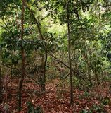 Jungle in gabon. Landscape of jungle in gabon Stock Photo