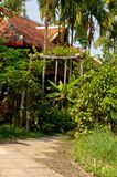 Jungle garden. Large traditional style cambodian house with jungle garden Royalty Free Stock Image