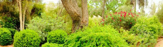 Jungle Garden Panorama Royalty Free Stock Photos