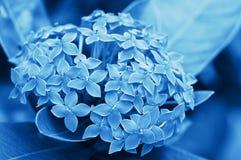 Jungle geranium. Royalty Free Stock Photography