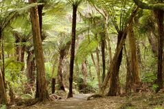 Jungle with giant ferns Stock Photos