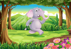 A jungle with a gray elephant Stock Photos